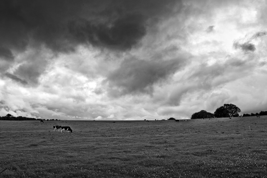 Buttevant Countryside #1