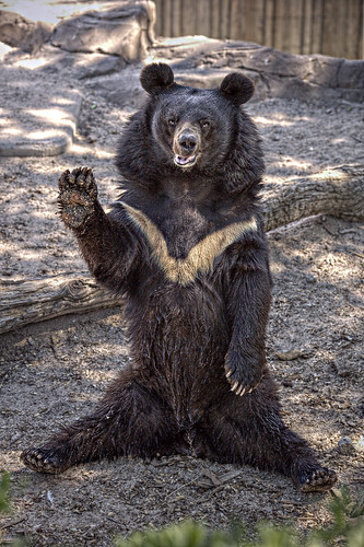 フリー写真素材, 動物, 哺乳類, クマ科, 熊・クマ,