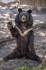 [フリー画像] 動物, 哺乳類, クマ科, 熊・クマ, 201012240700