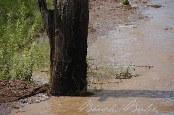 flood_0559