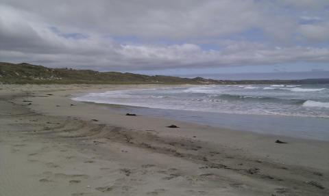 Waitangi beach