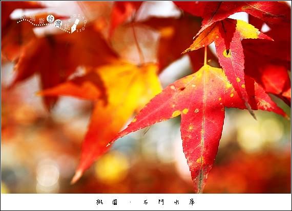 IMG_5306