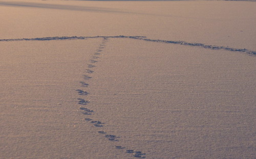 Footprints in the snow on the ice on the lake
