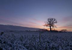 Cold morning (Arnoet) Tags: canon eos d sneeuw boom 50 vlezenbeek witse
