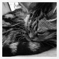 ネコはコタツの上で丸くなる。ジャマ。