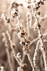 Tl (mmmt) Tags: winter white snow cold nikon dof bokeh pcs tl dr hideg d40x 3518g
