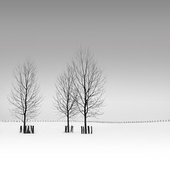 Three (Michael Diblicek) Tags: trees sky white 3 snow tree field fence grey three fenceline greyskiesblack blackandwhitefranchecomtfranchecomthautesaone hautesaoneeastfrance easternfrancesquare luxeuillesbainsn57vesoul