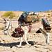 Donkey cargo