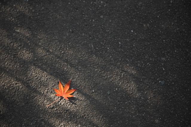 晩秋の記憶