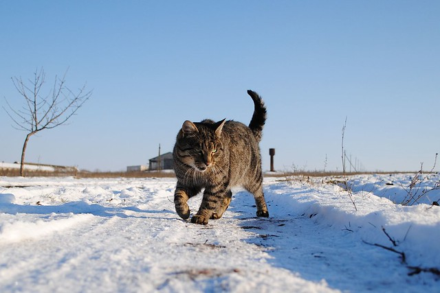 Кот на снегу