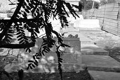 Old Jerusalem cemetery (Gali-Dana) Tags: sculpture friedhof cemeteries building tree cemetery grave graveyard statue death israel memorial mourning decay jerusalem cementerio tomb tombstone burial cemitério ישראל sorrow ירושלים necropolis mourn cimetière cementerios дерево тень necropoli friedhöfe cemitérios עץ cimiteri израиль иерусалим кладбище גדר cimetières ביתקברות בנין taphophilia cimiteris могила necropoleis надгробие ביתעלמין galidana