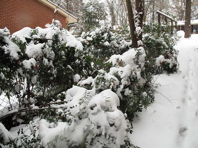 Snow Day 0298
