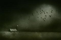 Farmer John's Field  (second revisit) (jumpinjimmyjava) Tags: canada nature birds night rural landscape farm foreboding pigeons magical artography jlbrown jumpinjimmyjava