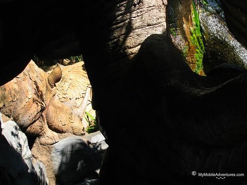 IMG_4917-WDW-DAK-Tree-of-Life-rhino