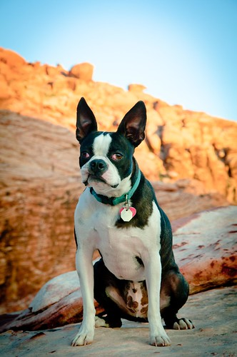 Henry at Red Rock Canyon