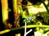 PC210034-1 (Ricardo Venerando) Tags: macro nature brasil insect bugs explore soe naturesfinest conservacion platinumphoto diamondclassphotographer ysplix goldstaraward fotocultura
