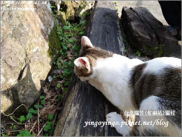 台北瑞芳(侯硐站)貓村20101128_R0016259