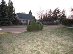 IMG_5707 (andre vautour) Tags: trees favorite house tree green pine blog bush published lawn favorites 2010 andrevautour canonpowershotg11