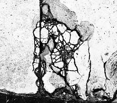 The Prepared Acrobat (tgbusill) Tags: blackandwhite bw d50 october neworleans nikond50 sidewalk nola cracks 2010 figurativeabstract
