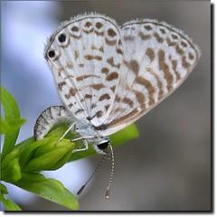 Borboletas sempre voltam... **** EXPLORE **** (Marina Linhares) Tags: life nature butterfly dof natureza felicidade happiness vida borboleta land pousa nikond3000 ringexcellence dblringexcellence