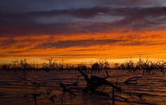 IMG_9981 (Bianca Ho) Tags: lake pamamaroo