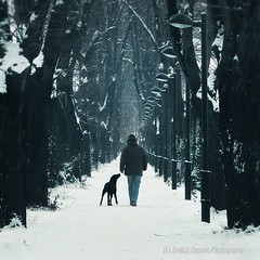 Companionship. Man and dog. Pirot, Serbia, Srbija. Tanjica Perovic Photography. (Tanjica Perovic Photography) Tags: blue trees winter friends two dog pet snow man love lines animal walking square photography togetherness alley fotograf photographer snowy path walk branches pair serbia perspective together getty lamps moment idyll bestfriend companion atmospheric pathway gettyimages dreamscape loyalty faithful srbija companionship cherish  catchycolorsblue nisava pirot kej explored srpski sigma1770mm fotografija  canoneos400d thelittledoglaughed  pirotskikej pirotskicilim  kejnanisavi  repetitionofelements pirotserbia mygearandme mygearandmepremium mygearandmebronze tanjicaperovic photographyforrecreation fathfullness pirotkej pirotski pirotsrbija  tanjicaperovicphotography availableforlicensingongettyimages