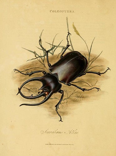 011-Scarabaeus Atlas- An epitome of the natural history of the insects of India…1800- Edward Donovan