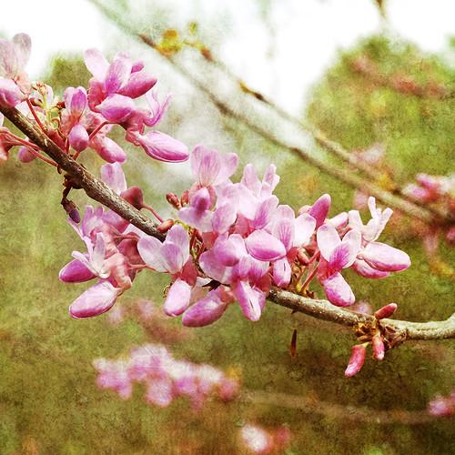 Pink Spring 3