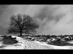 posbank (ronjaa photography) Tags: bw tree monochrome landscape postbank january thenetherlands sw landschaft baum veluwezoom niederlande 2011 mygearandmesilver mygearandmegold ronjaa mygearandmeplatinum mygearandmediamond dblringexcellence tplringexcellence flickrstruereflection1 flickrstruereflection2 flickrstruereflection3 flickrstruereflection4 flickrstruereflection6 flickrstruereflection7 eltringexcellence flickrstruereflectionexcellence