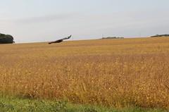 Eagle Over Soybean Field (lancejotto) Tags: fly bald eagle soar bird