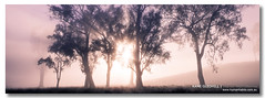 Peach Fog ([ Kane ]) Tags: trees winter mist cold fog canon landscape dawn air peach qld kane due gledhill queesnland kanegledhill