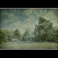Snow (sisyphus007) Tags: england snow reading unitedkingdom expression berkshire soe magicunicornverybest magicunicornmasterpiece