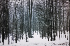 The woods (Emily Taliaferro Prince) Tags: trees winter snow tree woods vermont
