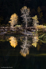 Fall Reflection, Yosemite National Park, California (Sudheendra Kadri) Tags: california orange reflection fall nature northerncalifornia river fallcolor merced yosemite yosemitenationalpark sudhi landscapephotography fallseason sudheendrakadri