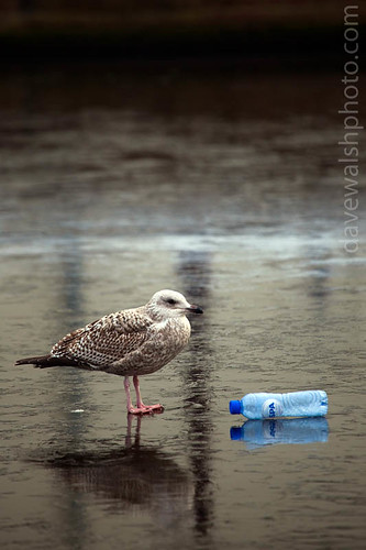 Plastic Bottle on a canal, Amsterdam