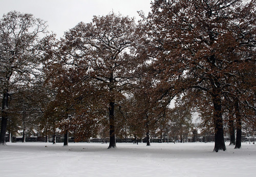 Snow-Nov_10_9