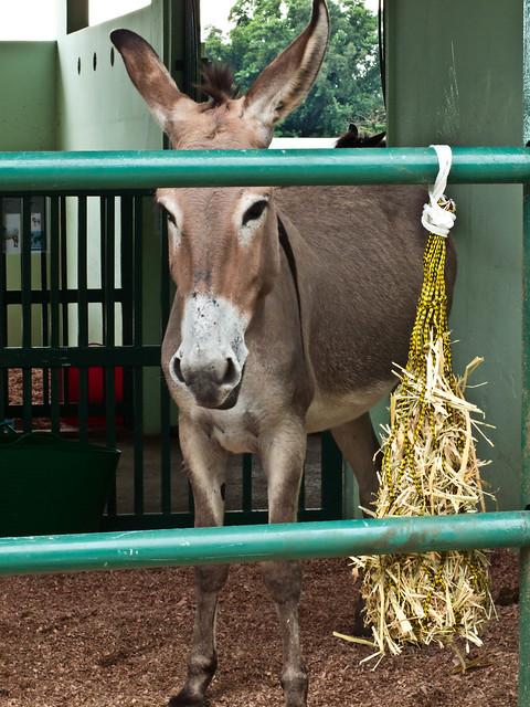 IMG_0115 Donkey , Stable