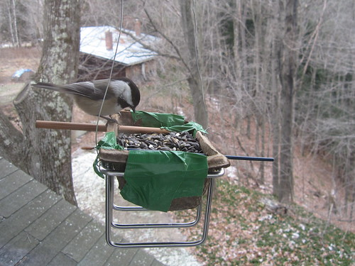 the birds love my janky home made feeder