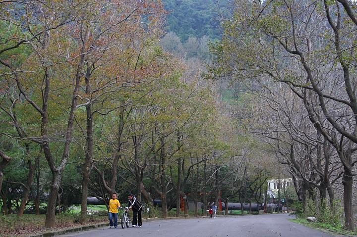 槭林公園020