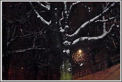 1 - 8 décembre 2010 Maisons-Alfort Il a neigé sur Maisons-Alfort (melina1965) Tags: leica trees winter light snow tree night lumix december îledefrance lumière hiver panasonic arbres neige nuit arbre 2010 décembre valdemarne maisonsalfort fx10 photoscape flickrthebest20102011