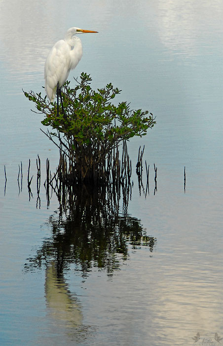 Egret on watch