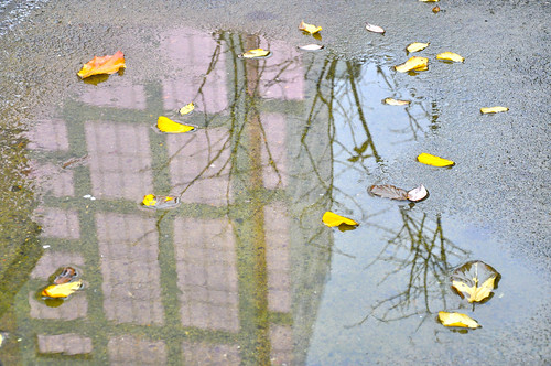Puddle ~ Leaves and Building