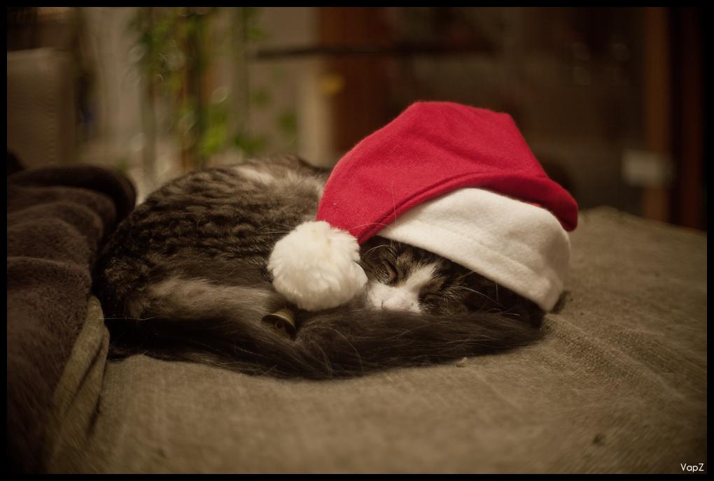 Mardi 14 Décembre - Père Noël 5254413847_fbc4c7183a_o