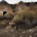 Wildrose Charcoal Kilns Death Valley