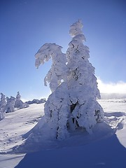 Centurion sur son cheval blanc (Chic Plante) Tags: france montagne cheval rando alsace neige arbre blanc vosges glace centurion randonne crtes hohneck