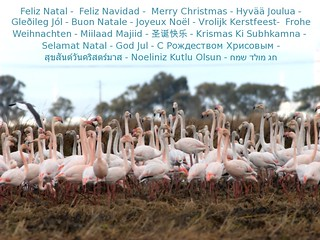 Christmas Flamingos for everyone. Just pick one!   º<:o)
