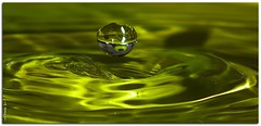 UFO [Explored] (-=[Joms]=-) Tags: macro green water refraction hs10 hs11 pnsers