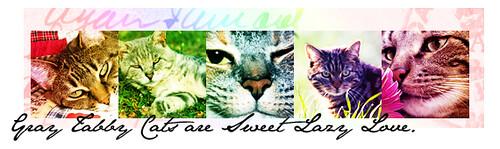 y Colourbars - Cats #girlyb_icons