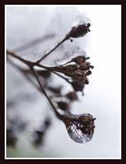 Frozen (Jan Gee) Tags: schnee winter snow sneeuw neige kou koude hiverno