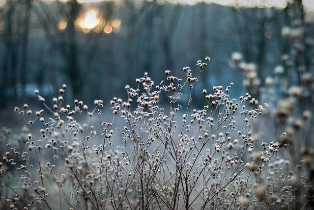 frosty-19